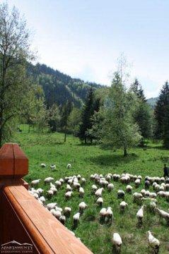 Widok z Borów