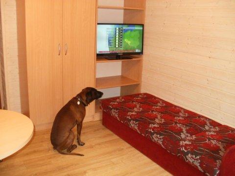 Międzywodzie - domek piętrowy -pokój z telewizorem.