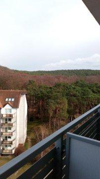 Zieleń latem a jesienią feria barw