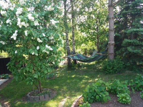 hamaki pod drzewami