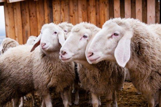 Wzgórze Owiec agroturystyka w malowniczym miejscu