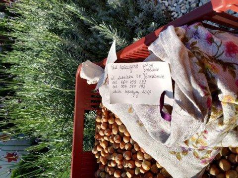 zbiór leszczyny 2019 - własna uprawa