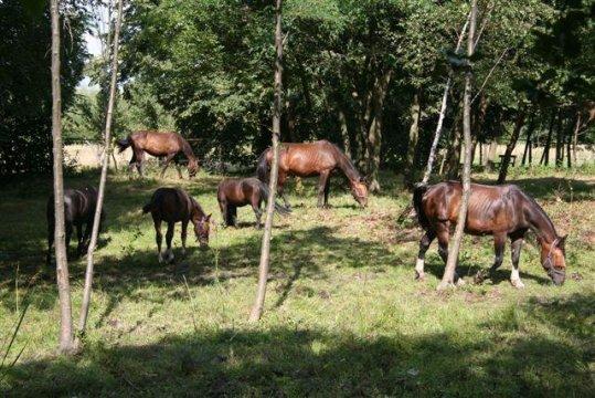 Szczęśliwe konie - Gosp. Agroturystyczne Leśna Stajnia