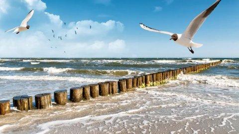 Słoneczne Mieszkanie Nad Morzem Bałtyckim
