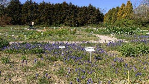 Ogród Botaniczny Mapa Zdjęcia Opinie